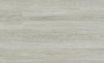 NO.6001-白楓木