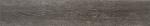 0046 蘇黎世古橡 Zurich Oak