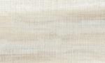 3191 南洋杉木 Araucaria